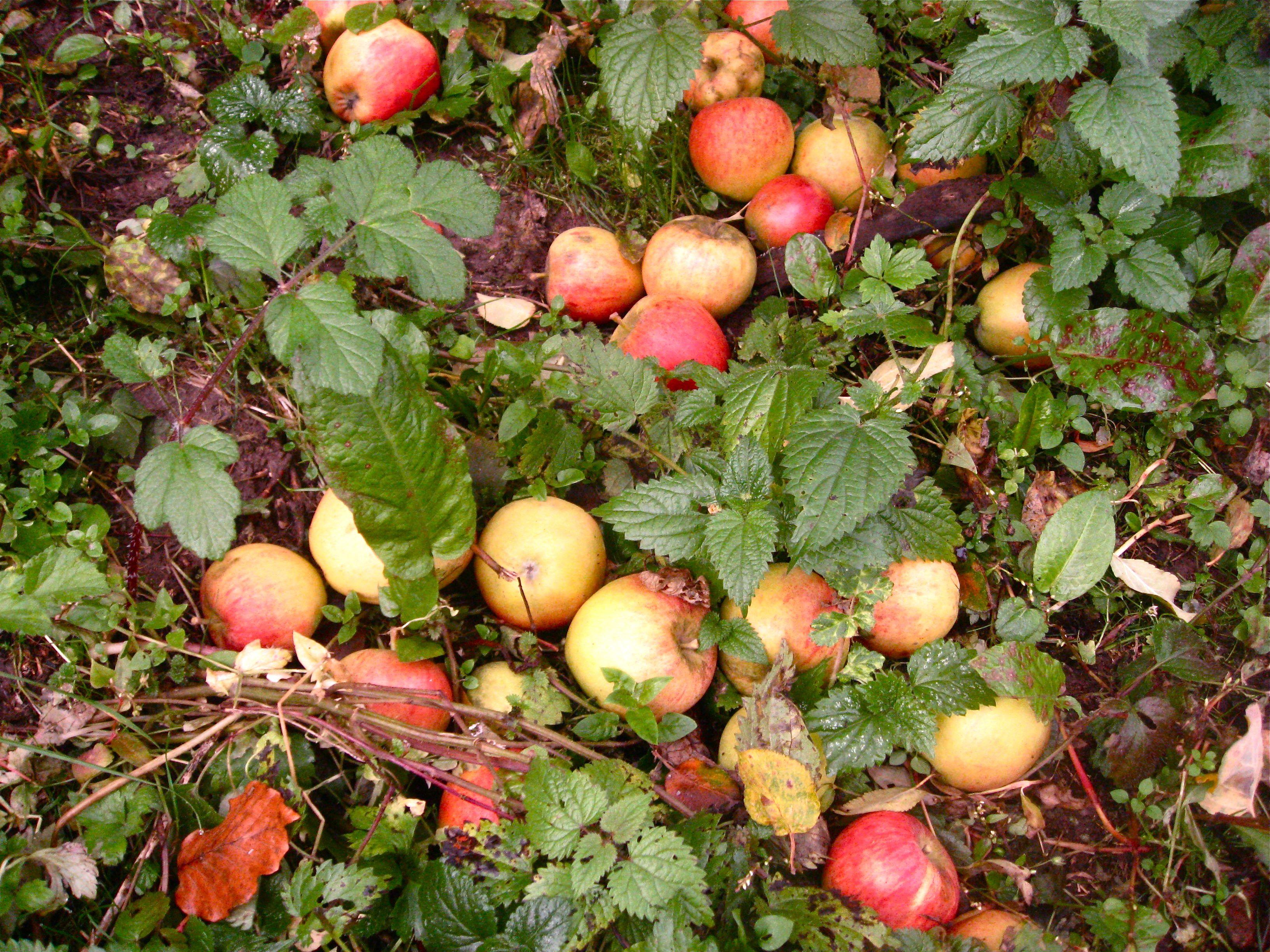 Ernte Im Herbst Herbstzeit