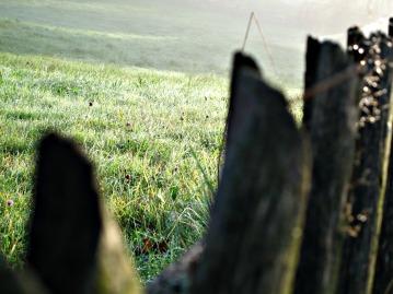 Herbstwiese am Morgen
