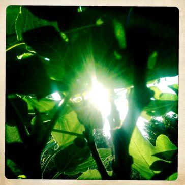1Die Sonne und das Blatt