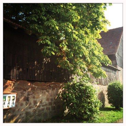 Kastanienbaum im September bei der Scheune