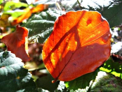 oktoberfrau-und-ein-goldenes-blatt