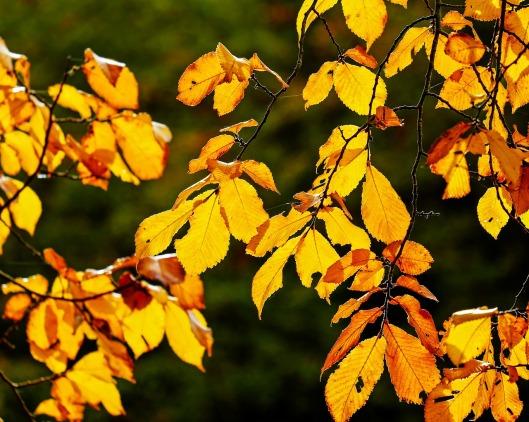 autumn-2807364_1280